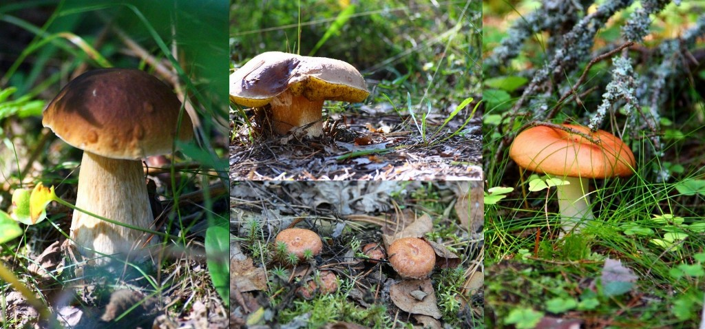 Naissaare loodusturism - metsasaadused